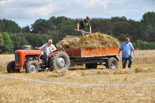 Fergies' Vintage Harvest Happening