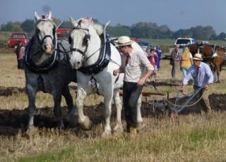 624_ploughing_festival_horses_142.jpg